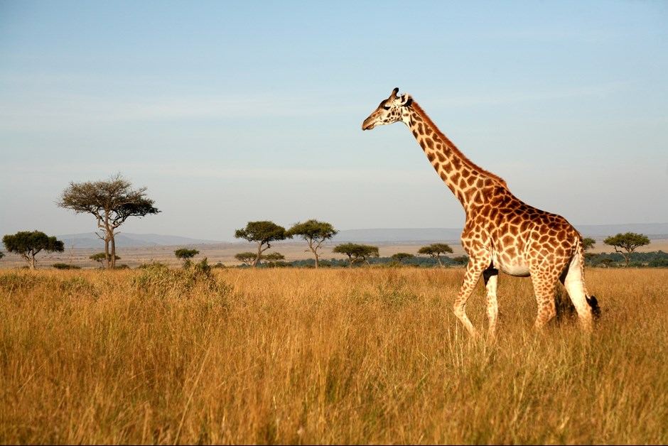 A Week in the Wild – The Ultimate Fairmont Safari Experience in Kenya