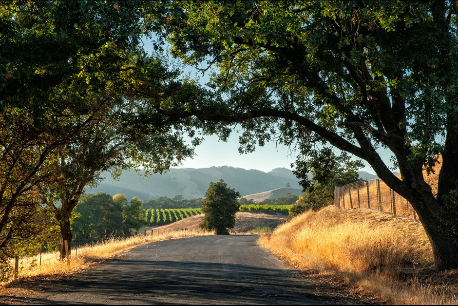 Agritourism: Wining, Dining and Farm-Tromping in Sonoma