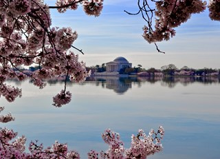 Springtime in the District: A Washington, D.C. Getaway