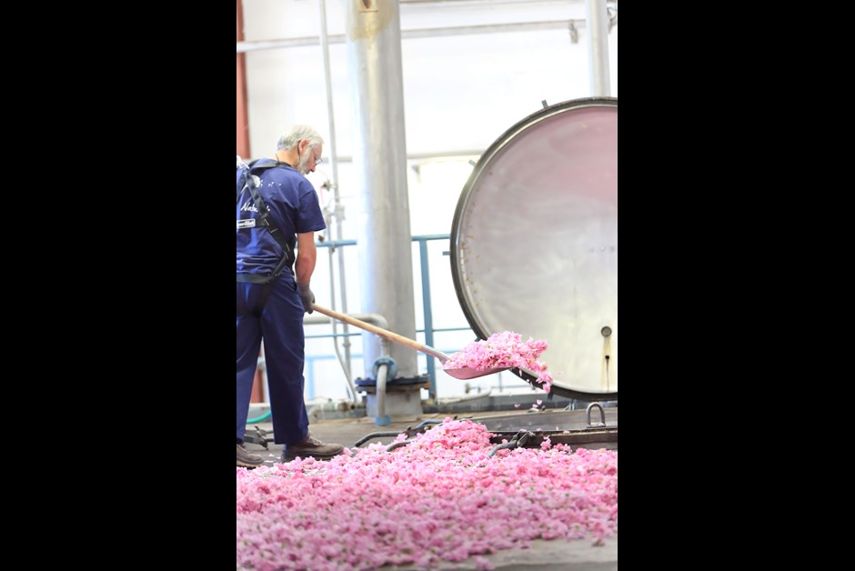 Roses being sent for extraction