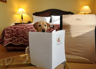 Furry Friends Offered Full Menus at Fairmont