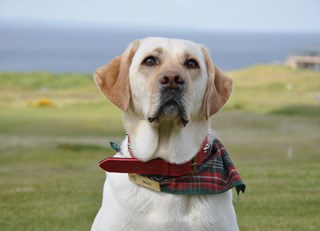 Tail Wagging Trivia from Fairmont St Andrews!