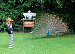 Standing on the equator with a peacock