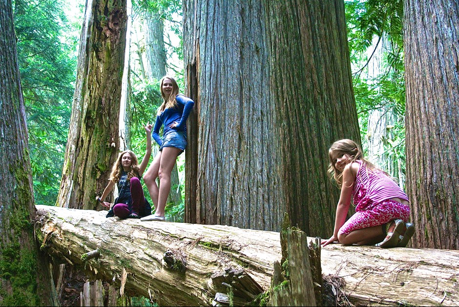 Hiking Amongst Ancient Cedars as Chateau Whistler
