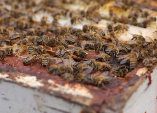 The career path of a worker bee! (The Buzz on Bees with Bee Butler Michael King)
