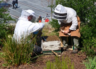 The Bees are Back in Town! - The Buzz on Bees with Bee Butler Michael King (April 2015)