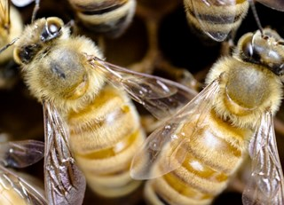 A Honey of a Summer ~ The Buzz on Bees with Bee Butler Michael King (July 2015)