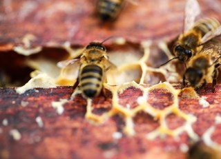The Summer That Keeps on Giving ~ The Buzz on Bees with Bee Butler Michael King (August 2015)
