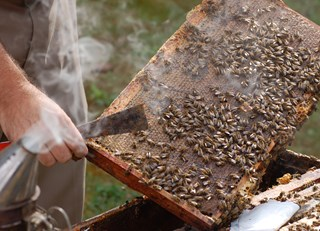 "A HONEY OF A ""TAKE-AWAY"" ~ The Buzz on Bees with Bee Butler Michael King (August 2015)"