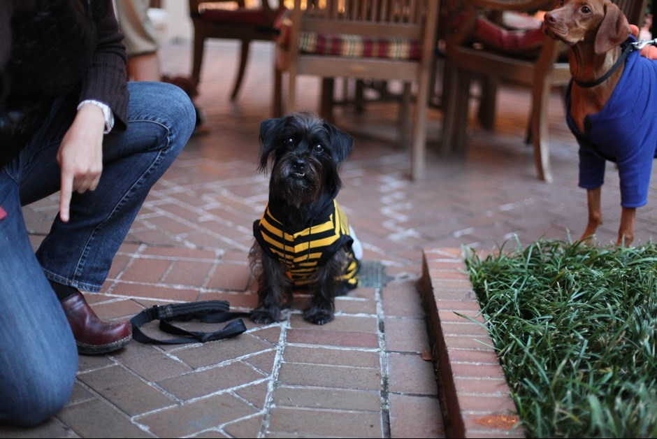 The Fourth Annual Howl-O-Ween Trick or Treating for Dogs at Fairmont 1