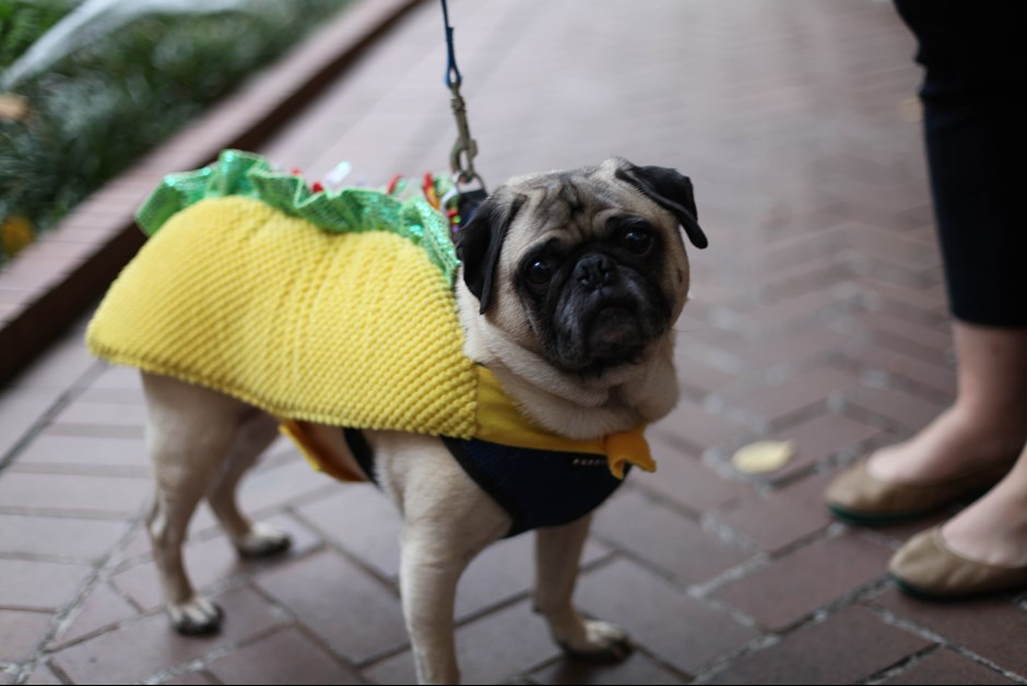The Fourth Annual Howl-O-Ween Trick or Treating for Dogs at Fairmont 16