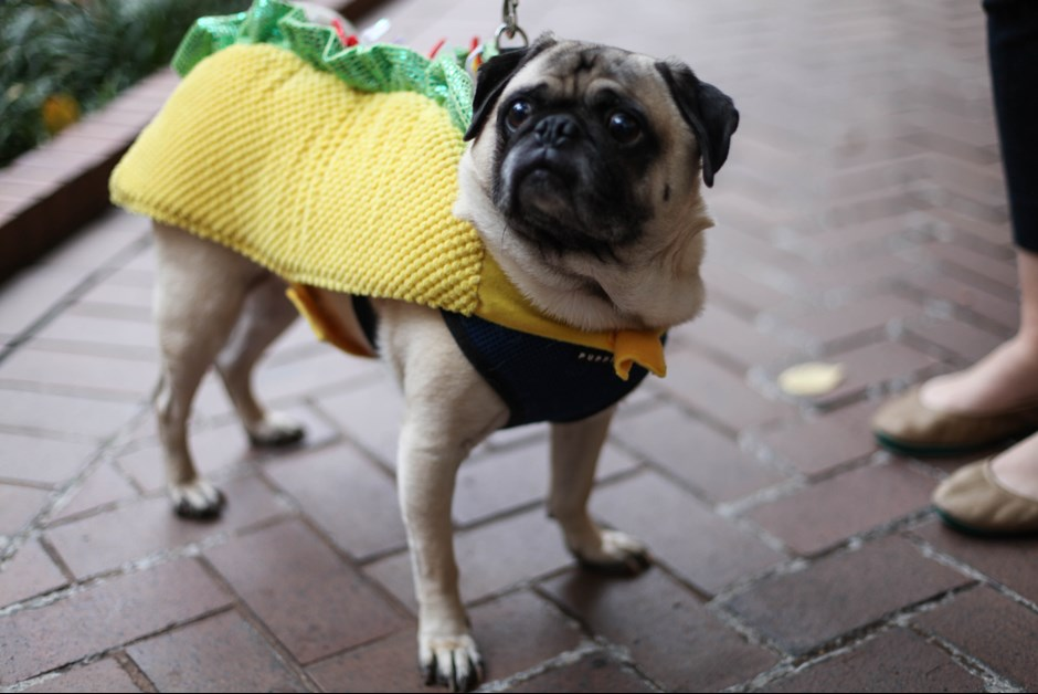 The Fourth Annual Howl-O-Ween Trick or Treating for Dogs at Fairmont 17