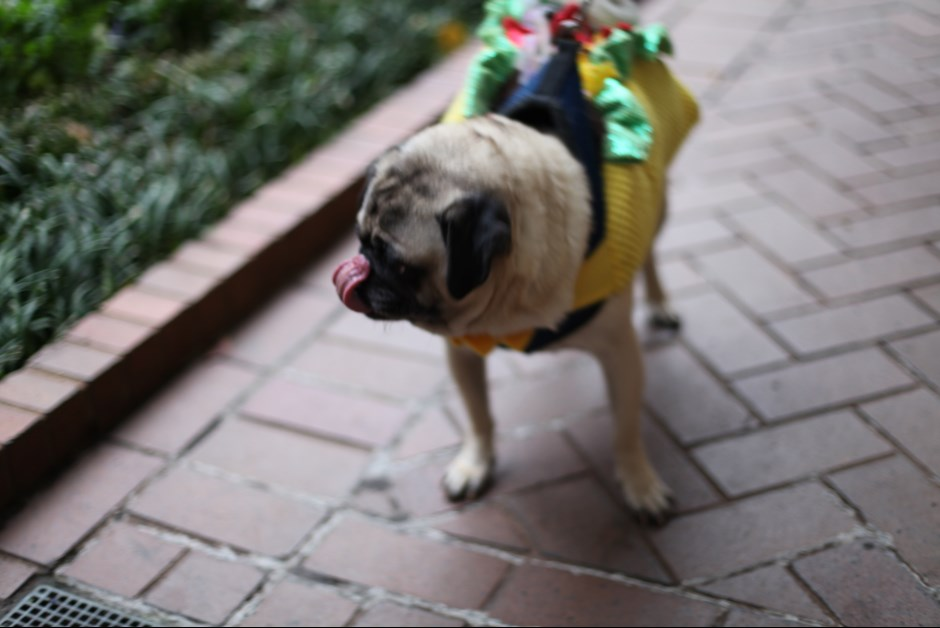 The Fourth Annual Howl-O-Ween Trick or Treating for Dogs at Fairmont 4