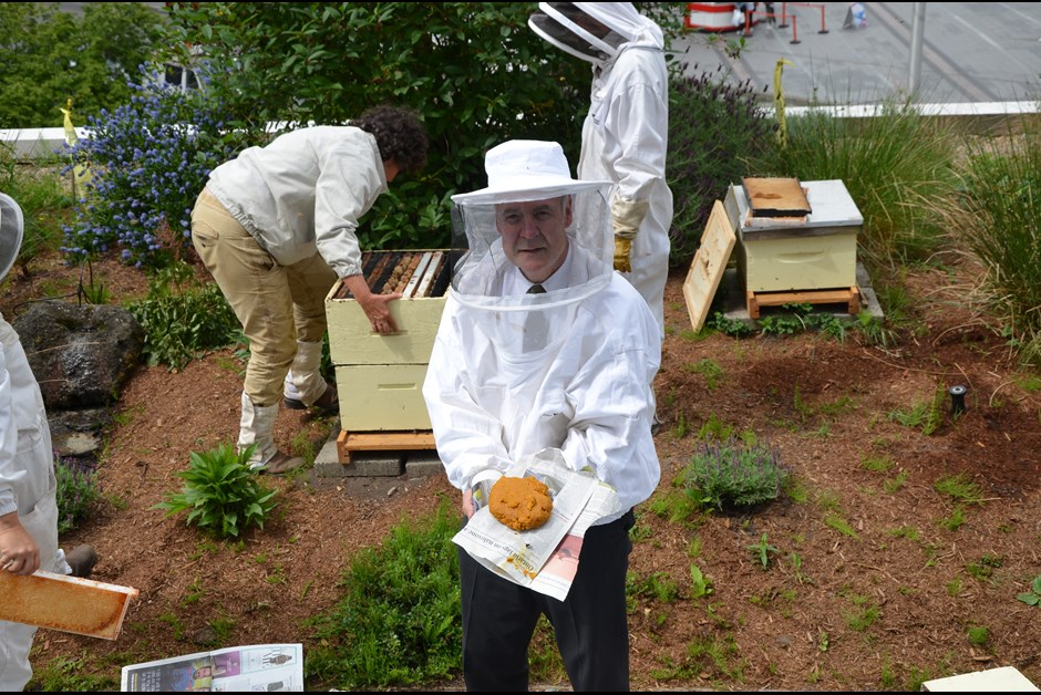 THE BEES ARE BACK IN TOWN - THE BUZZ ON FAIRMONT BEES WITH BEE BUTLER MICHAEL KING (MAY 2016)