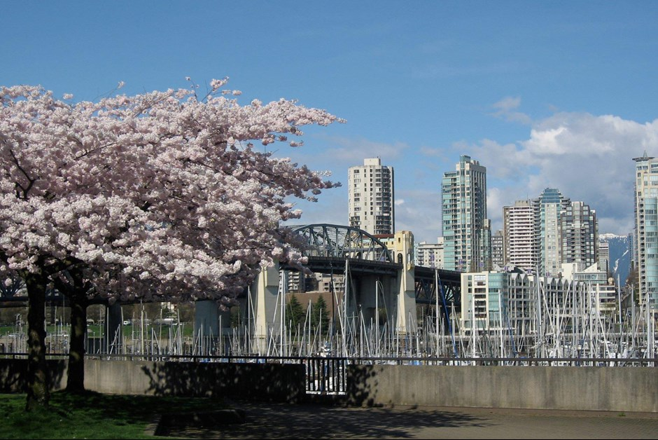 Fairmont Waterfront Cherry Blossom Run
