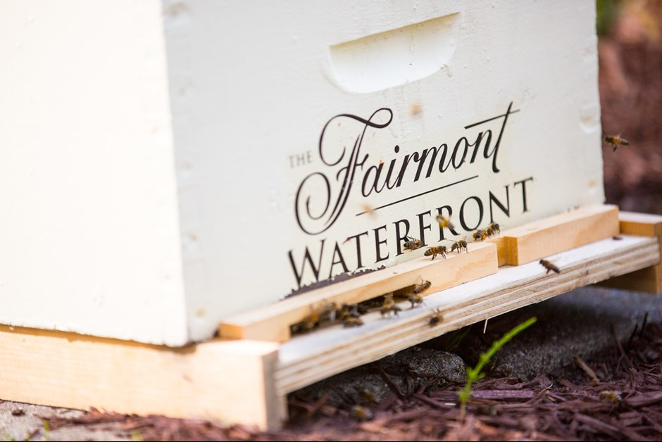 OUR WATERFRONT HONEY BEES... DELAYED BUT NOT DENIED! - THE BUZZ ON BEES WITH BEE BUTLER MICHAEL KING (MAY 2017)