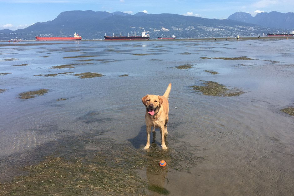 Ella's Top 5 Places to Visit with your Dog in Vancouver